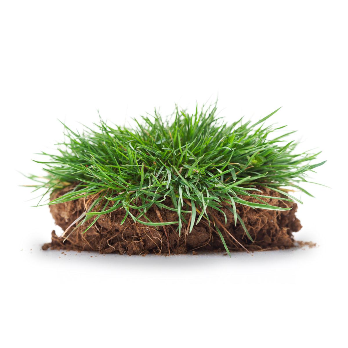 Premium Garden Turf